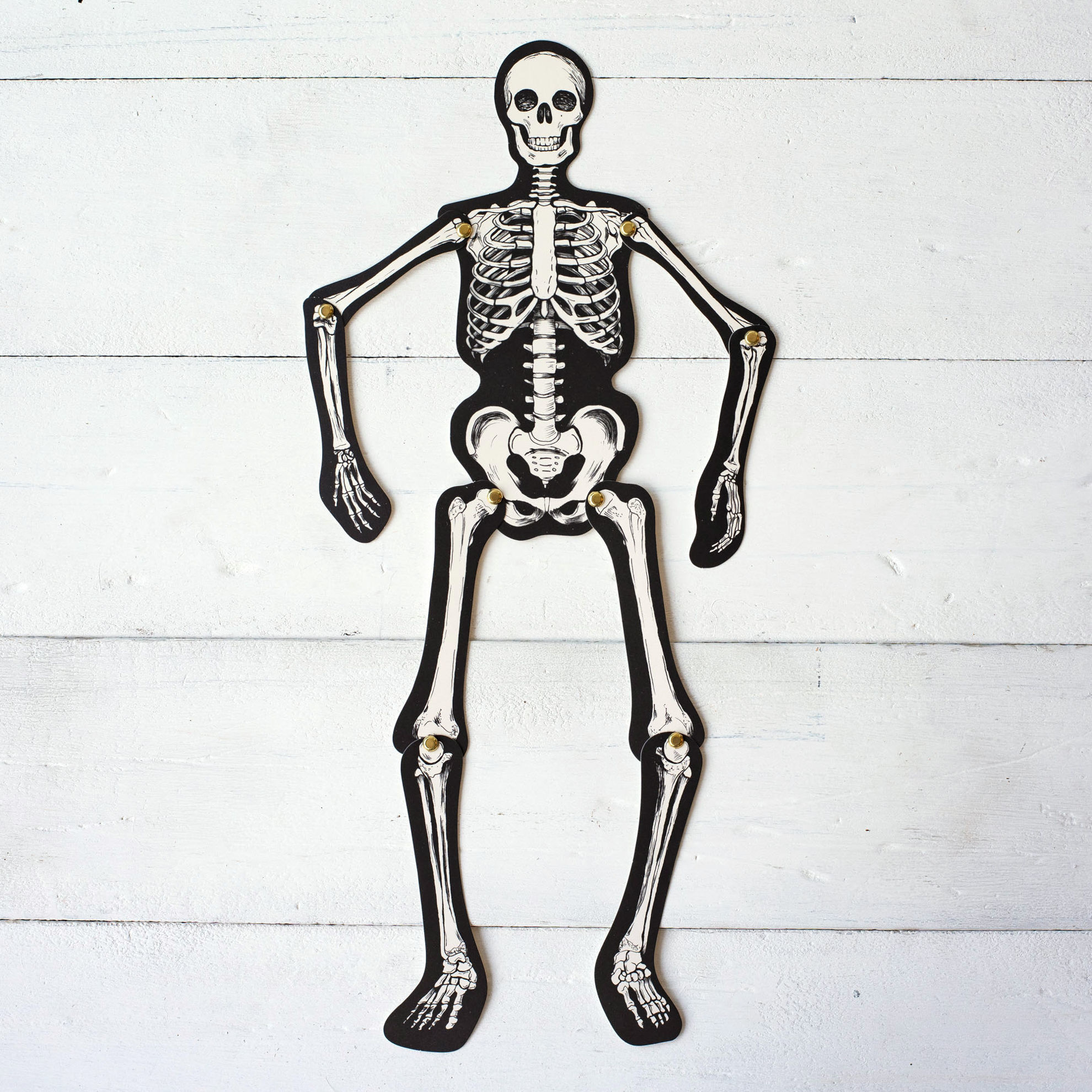 Articulated Skeleton Decorative Accent by Hester & Cook