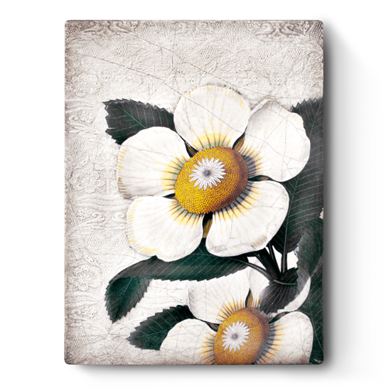 White Blossoms by Sid Dickens